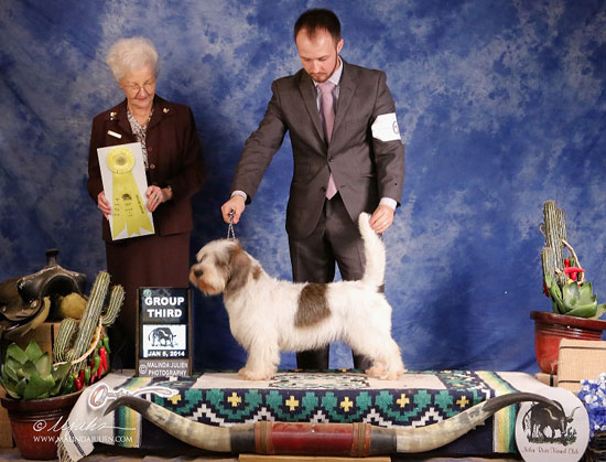 GCH Mirepoix's Figgy Pudding